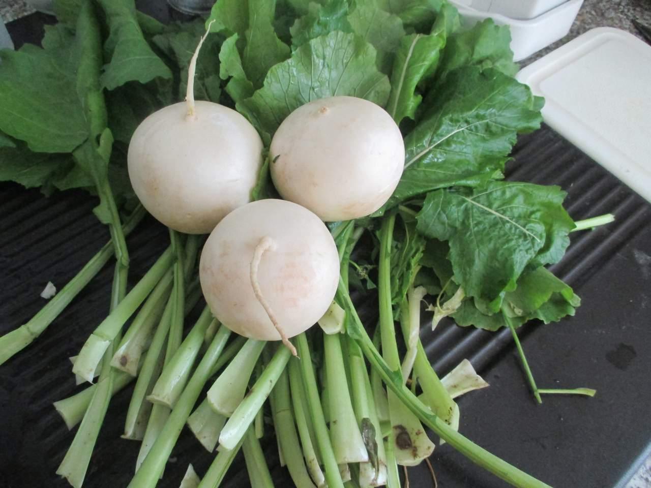 Mairübchen werden mit dem zarten Grün gekocht